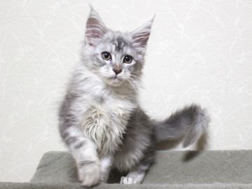 Runrun_kitten3_18121402