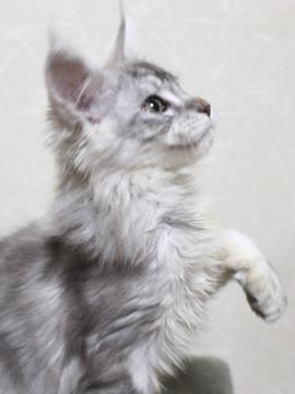 Runrun_kitten3_18121403