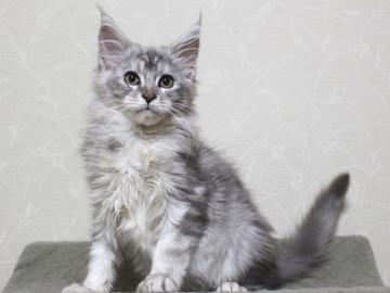 Runrun_kitten3_18121404