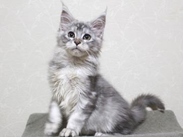 Runrun_kitten3_18121405