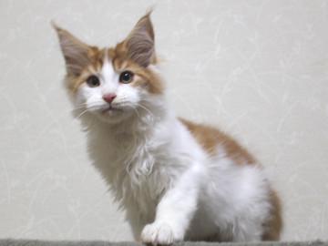 Runrun_kitten4_18121404