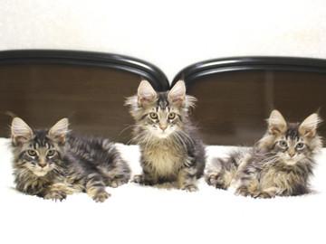 Ange_kittens_18121701