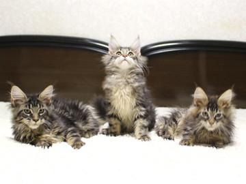 Ange_kittens_18121702