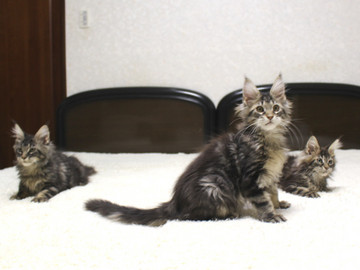 Ange_kittens_18121703