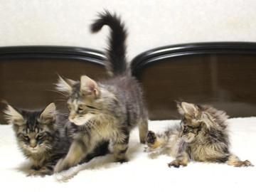 Ange_kittens_18121704