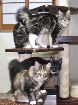 Cartier_kittens_18122001