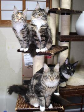 Cartier_kittens_18122002