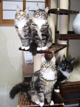 Cartier_kittens_18122003