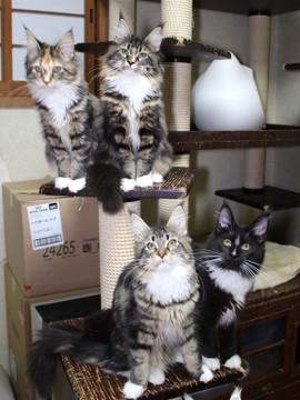Cartier_kittens_18122004