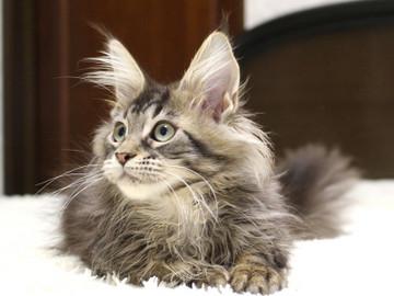 Ange_kitten3_18122706