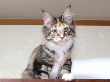 Cartier_kitten4_18123002