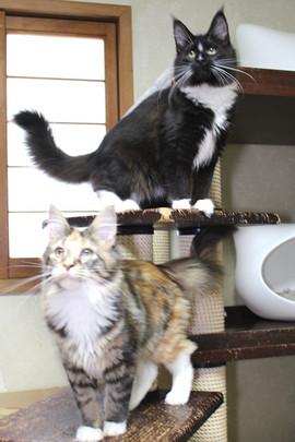 Cartier_kittens_18123001