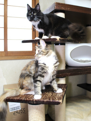 Cartier_kittens_18123002