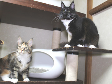 Cartier_kittens_18123003