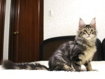 Ange_kitten1_19010603