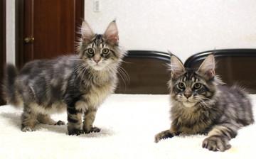 Ange_kittens_19010601