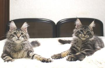 Ange_kittens_19010602