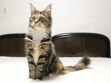 Cartier_kitten4_19011207