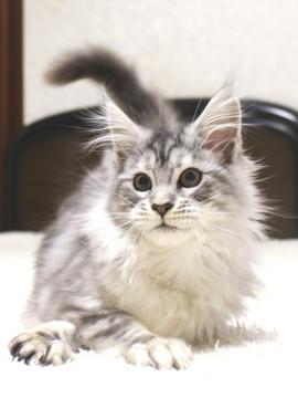 Runrun_kitten2_19011607