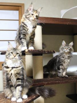 Kittens_19012401