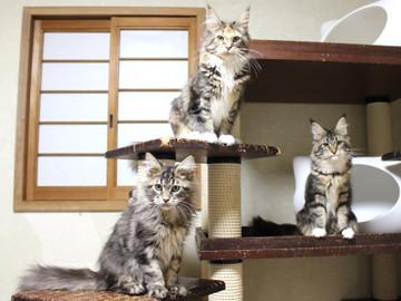 Kittens_19012402