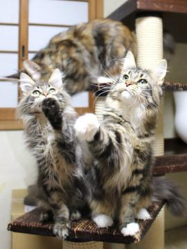 Kittens_19012403