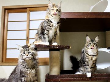 Kittens_19012404