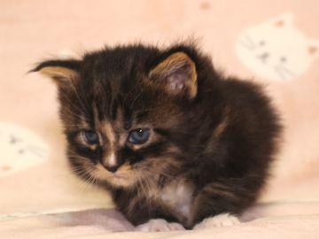 Ange_kitten1_190402