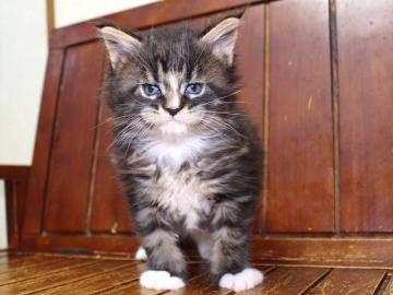 Ange_kitten1_19041201