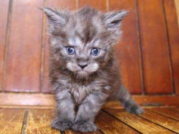 Ange_kitten3_19041201