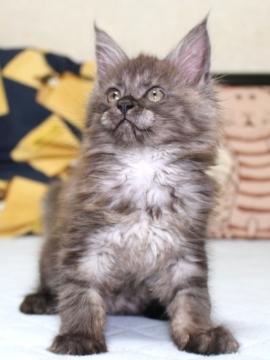 Ange_kitten3_19050801