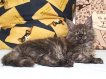 Ange_kitten3_19050805