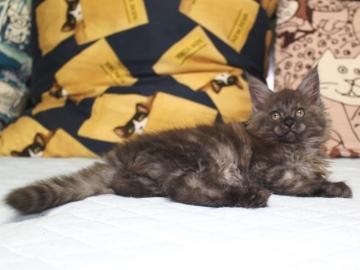 Ange_kitten3_19050806