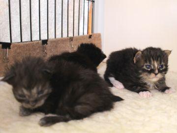 Ange_kittens_19032701