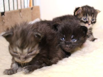 Ange_kittens_19032702