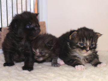 Ange_kittens_19032703