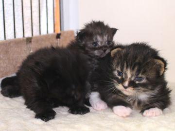Ange_kittens_19032705