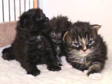 Ange_kittens_19032706