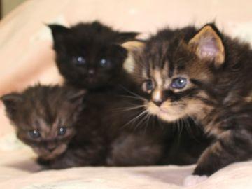 Ange_kittens_190401