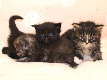Ange_kittens_190402