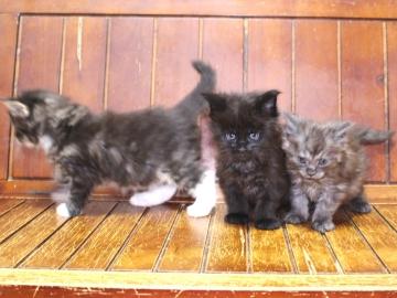 Ange_kittens_19041201