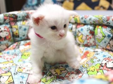 Blanche_neige_kitten1_19050201