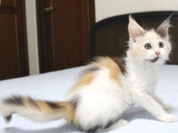 Chardonnay_kitten1_19062101