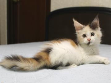 Chardonnay_kitten1_19062102