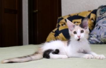 Chardonnay_kitten1_19071002