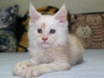 Chardonnay_kitten2_19060606