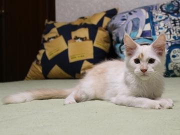 Chardonnay_kitten2_19071202