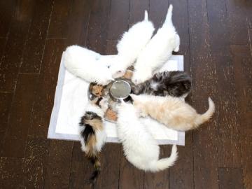 Kitten_19052701