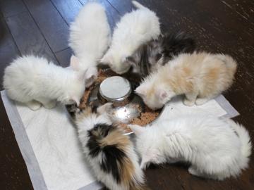 Kitten_19052702