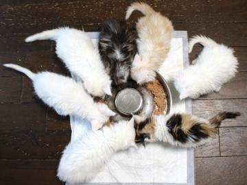Kitten_19052703